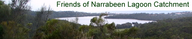 Narrabeen Lagoon viewed from the west